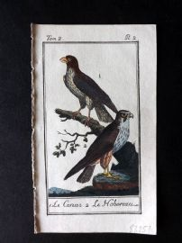 Buffon 1785 Antque Hand Colored Bird Print. Hobby 2-2